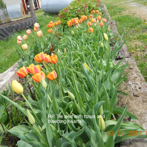 Name:  Spring'12.JPG Views: 185 Size:  96.3 KB
