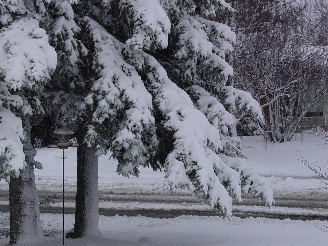 Name:  april snow 003.JPG Views: 40 Size:  327.1 KB