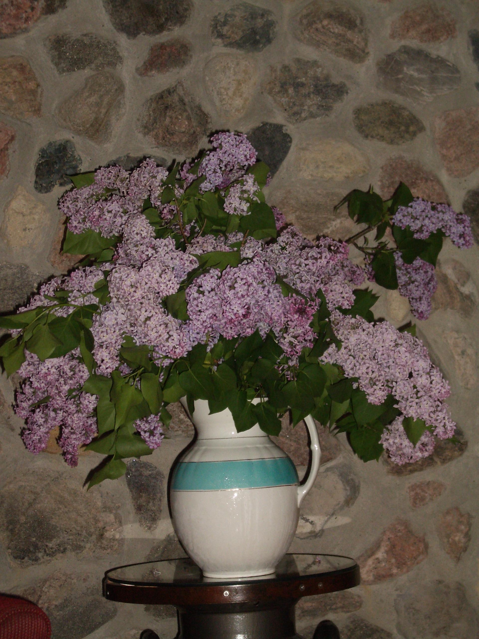 Name:  Lilacs (1).JPG Views: 66 Size:  1.53 MB