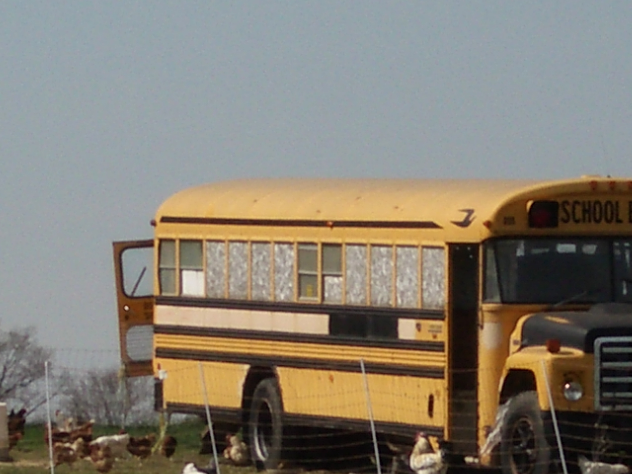 Name:  ChickenBus2009 (5).jpg