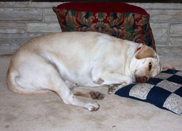 Name:  Annie & my pillow.jpg Views: 63 Size:  51.6 KB