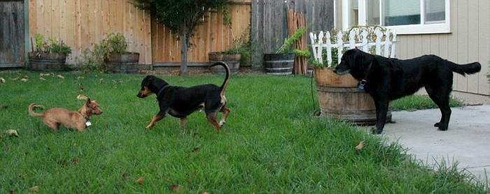 Name:  3dogs-vi.jpg Views: 129 Size:  71.3 KB
