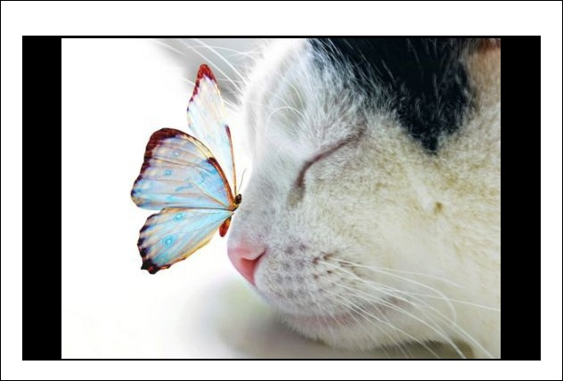 Name:  butterfly.jpg Views: 1407 Size:  62.3 KB