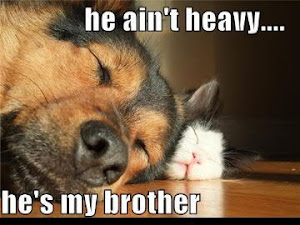 Name:  dog and cat.JPG Views: 1083 Size:  26.9 KB