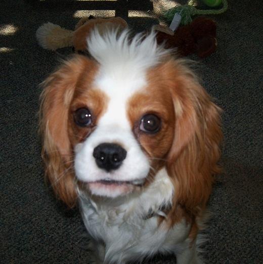 Name:  Riley 826bad hair day.jpg Views: 941 Size:  351.4 KB