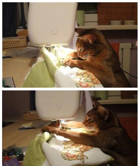 Name:  sewing cat.jpg Views: 2265 Size:  35.9 KB