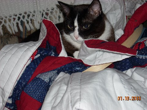 Name:  Charlie & Quilt.jpg