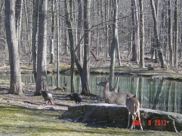 Name:  2013 turkey deerner 004.JPG Views: 115 Size:  204.9 KB