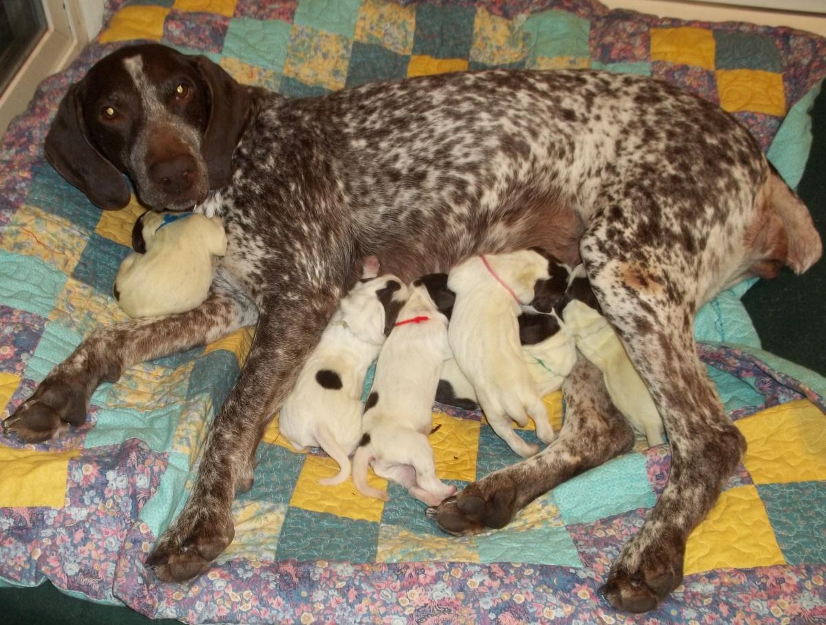 Name:  Heidi Family Feb 20.jpg Views: 1583 Size:  811.0 KB
