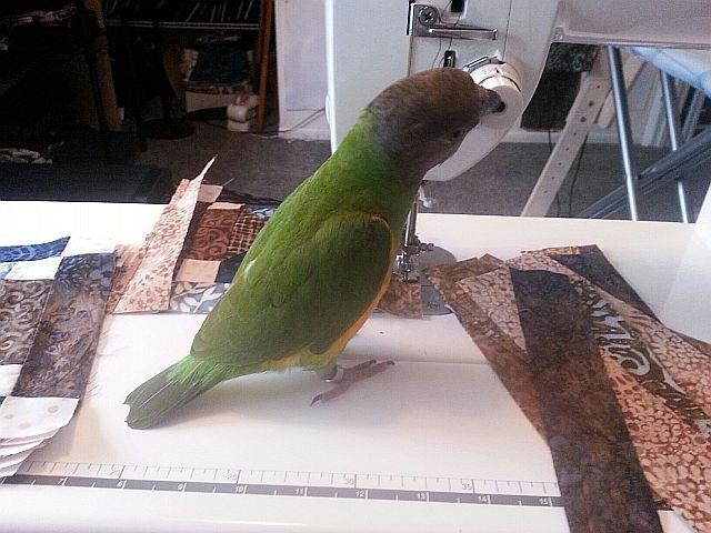 Name:  kiki-sewing2.jpg Views: 196 Size:  60.4 KB