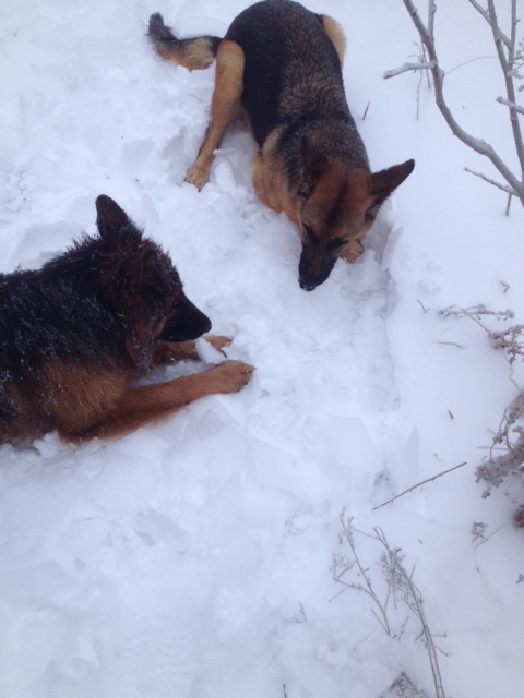 Name:  Ky & Ares eating ice.jpg Views: 139 Size:  83.3 KB