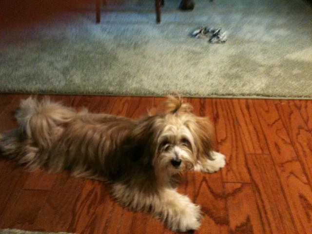 Name:  Lucy before grooming.jpg Views: 107 Size:  43.5 KB