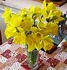 easter-daffodils.jpg