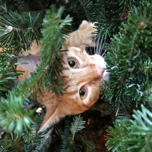 Name:  Mookie in the tree.jpeg Views: 1235 Size:  152.4 KB