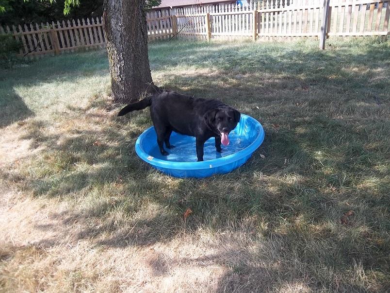 Name:  Bruiser Pool2Paint.jpg Views: 65 Size:  405.2 KB