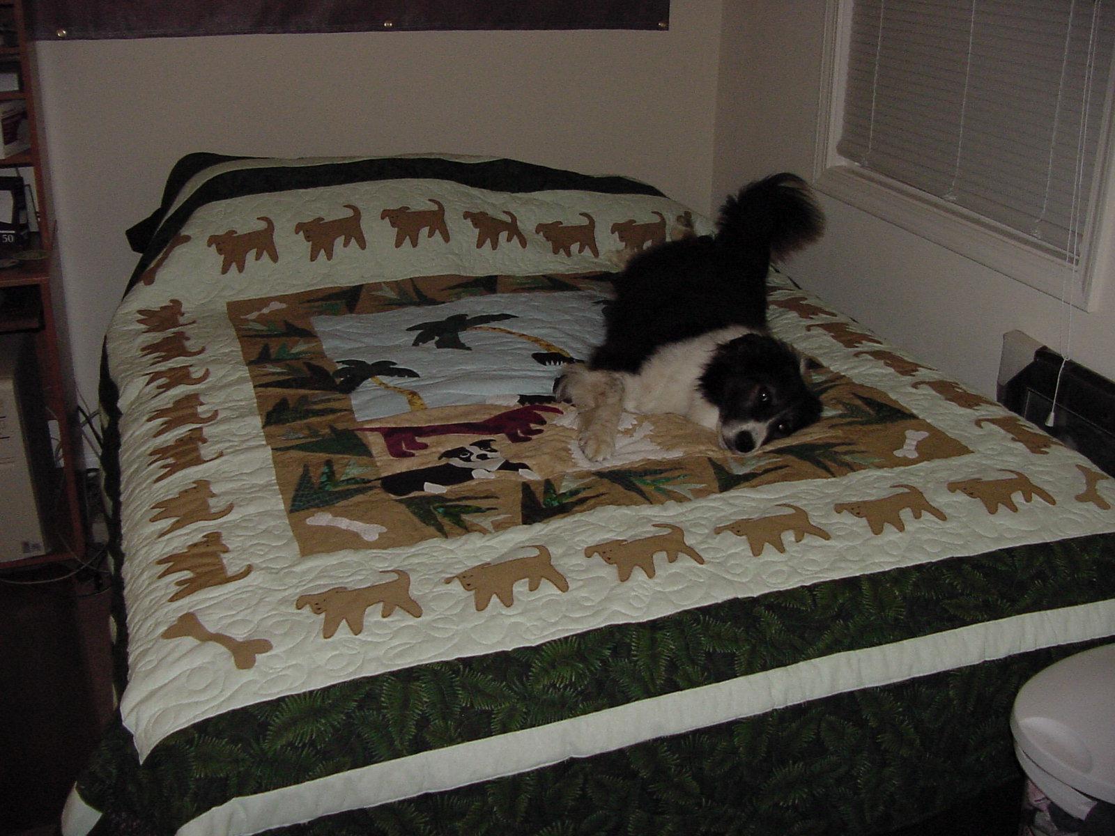 Name:  ripley enjoying her quilt 2.JPG Views: 56 Size:  344.6 KB