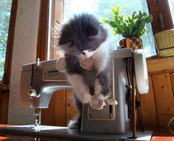 Name:  cat.jpg Views: 4433 Size:  49.9 KB