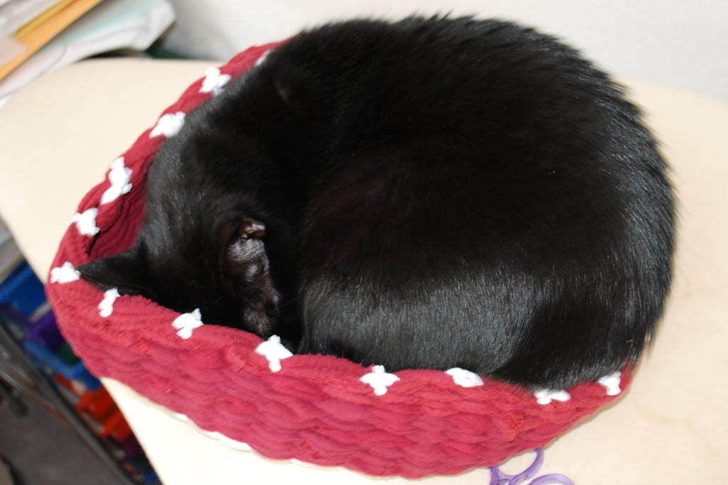 Name:  Nuala asleep in the fabric basket.JPG