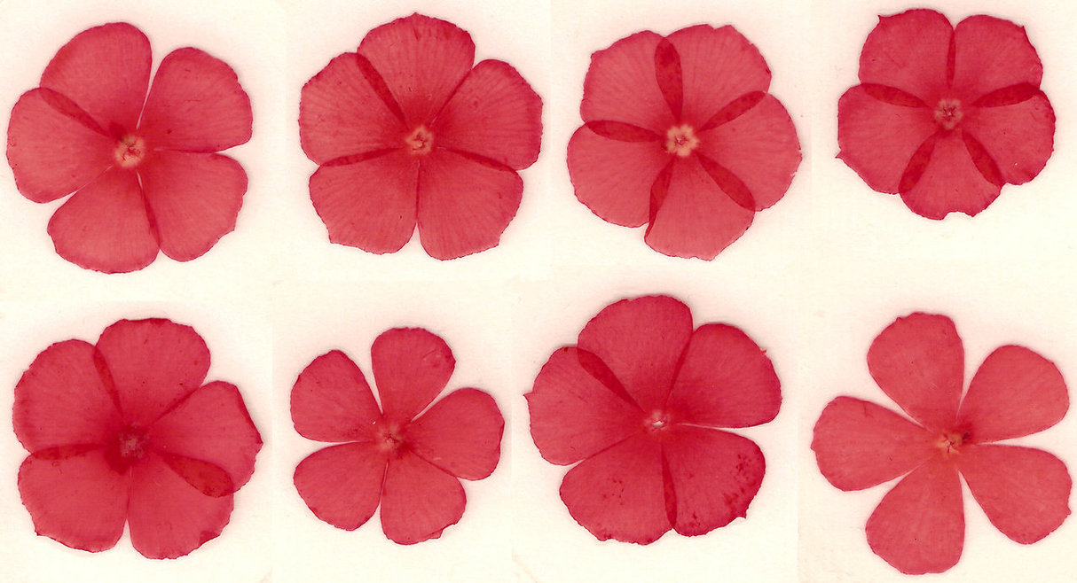 Name:  Pressed_red_flower_blossoms_by_Enchantedgal_Stock.jpg Views: 282 Size:  152.0 KB
