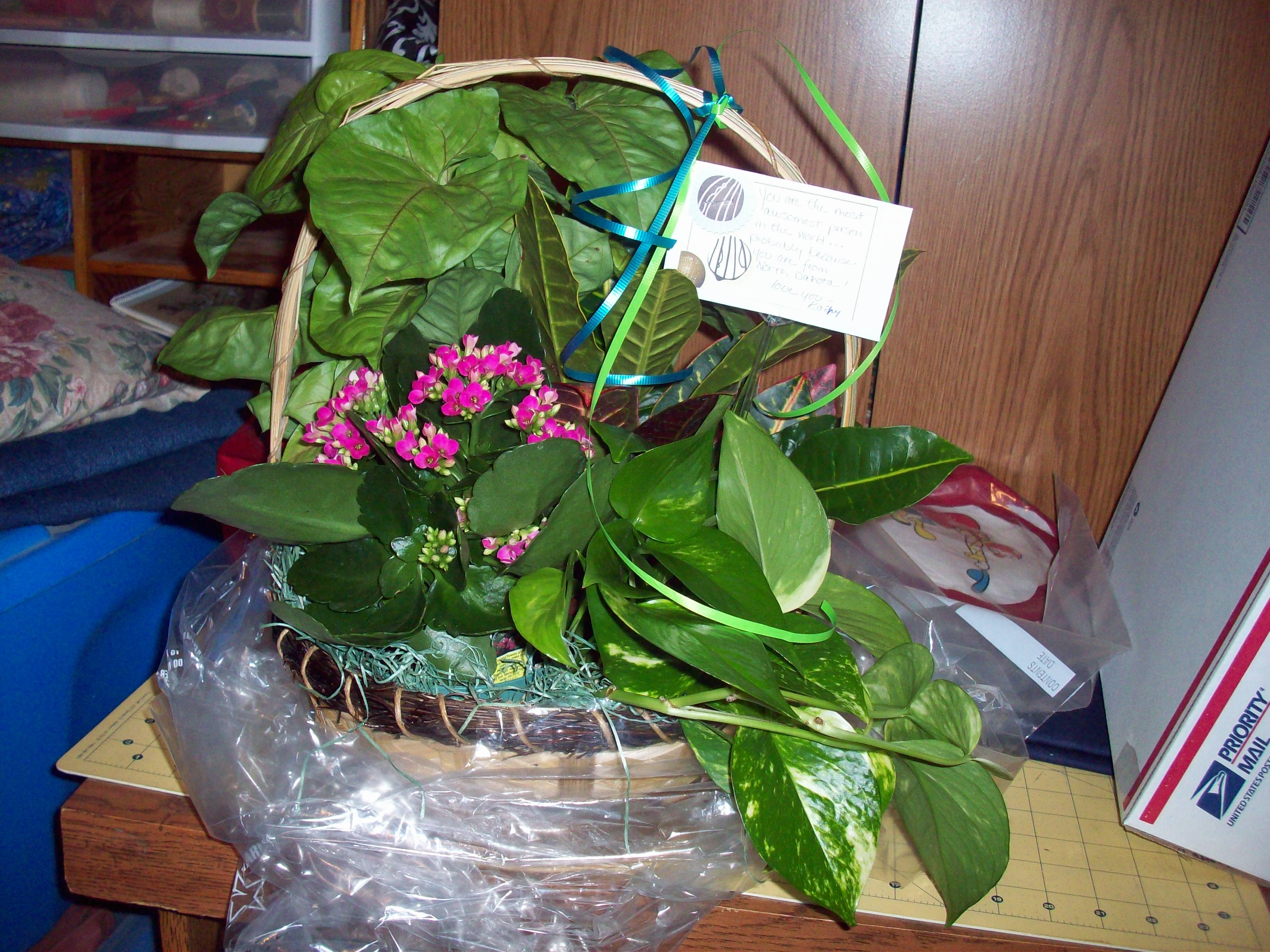 Name:  kathy's flowers 001.jpg