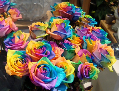 Name:  a-bunch-of-rainbow-roses-for-sale-by-Gertrud-K-thumb-399x305-6584.jpg