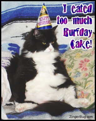 Name:  too_much_burfday_cake_cat.jpg