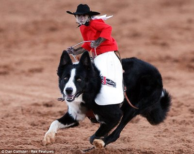 Name:  rodeo monkey.jpg