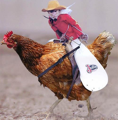 Name:  Monkey-Cowboy-Riding-Chicken-55675.jpg Views: 89 Size:  66.7 KB