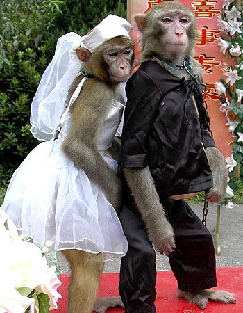 Name:  Monkey Wedding.jpg Views: 86 Size:  57.1 KB