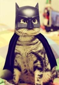 Name:  bat cat.jpg Views: 87 Size:  25.3 KB