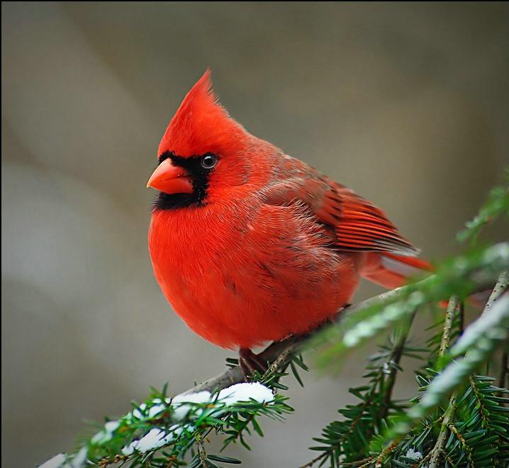 Name:  k state bird.jpg Views: 137 Size:  143.6 KB