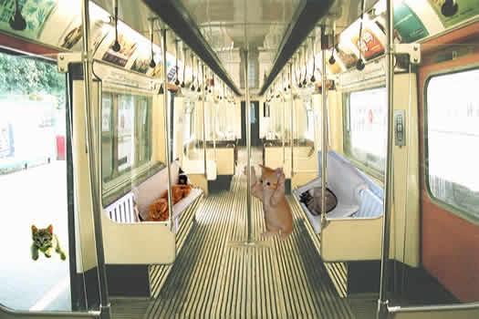 Name:  cat_basket_train.jpg Views: 104 Size:  25.4 KB