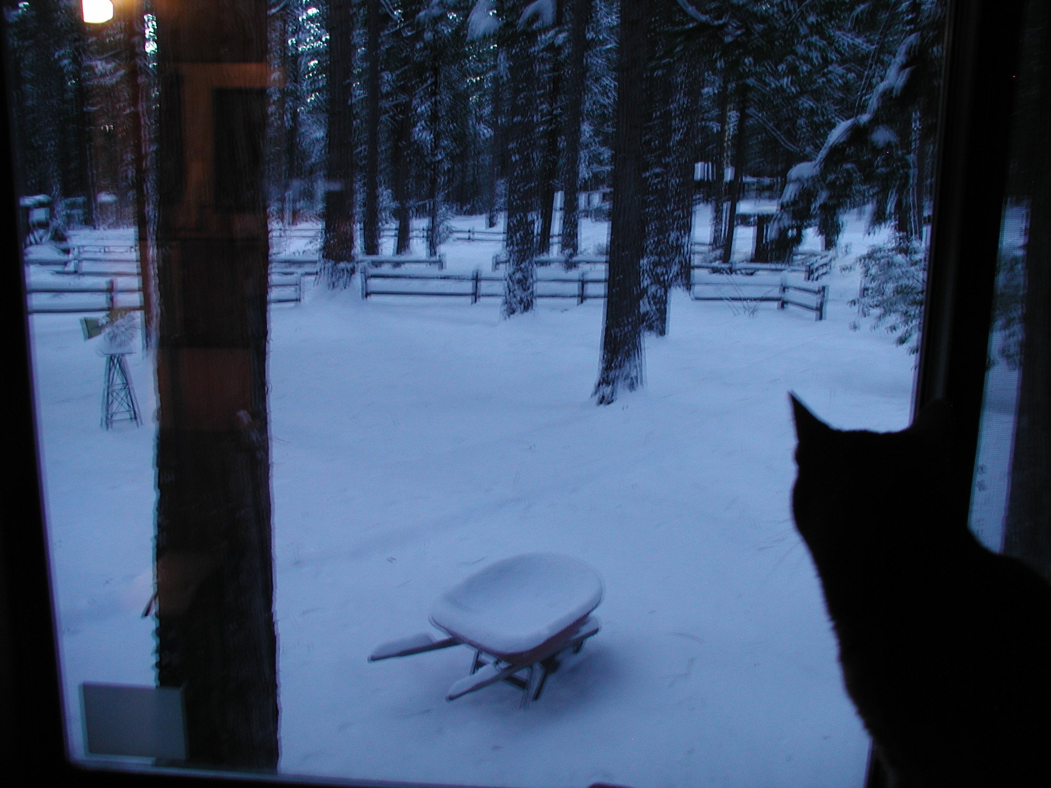 Name:  morning snow 009.jpg Views: 101 Size:  627.0 KB