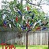 th.jpg-bottle-tree.jpg