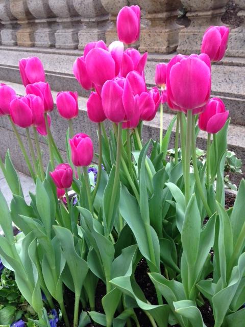 Name:  tulips.JPG Views: 56 Size:  156.4 KB