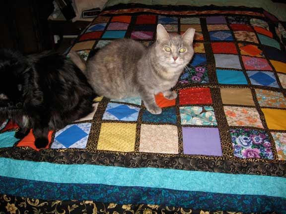 Name:  sudoku-and-cats-1.jpg