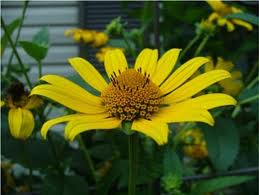 Name:  daisy3.jpg Views: 650 Size:  8.8 KB