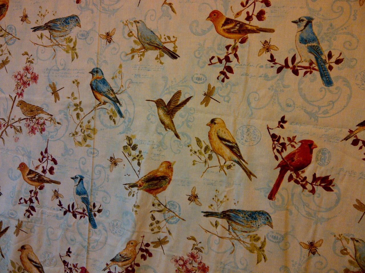 Name:  birds1.jpg Views: 1553 Size:  325.6 KB
