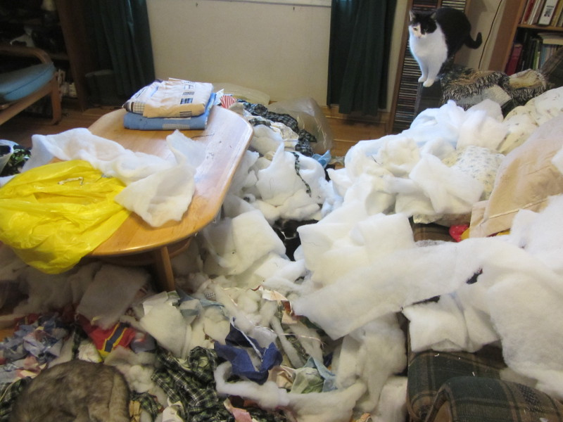 Name:  misc. mess poly in living room.JPG Views: 4098 Size:  121.1 KB