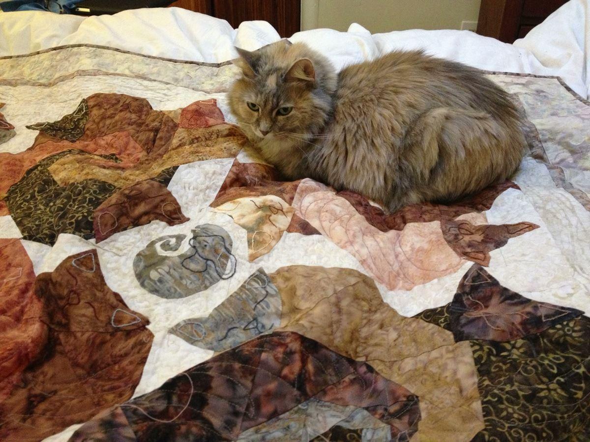 Name:  2013-sleepingcats4gale-withClio.jpg Views: 254 Size:  187.0 KB