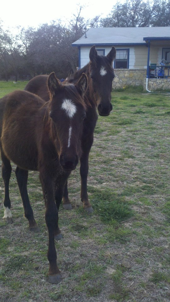 Name:  horses.jpg Views: 390 Size:  144.0 KB